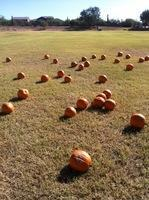 Have a Pumpkin Patch at your school