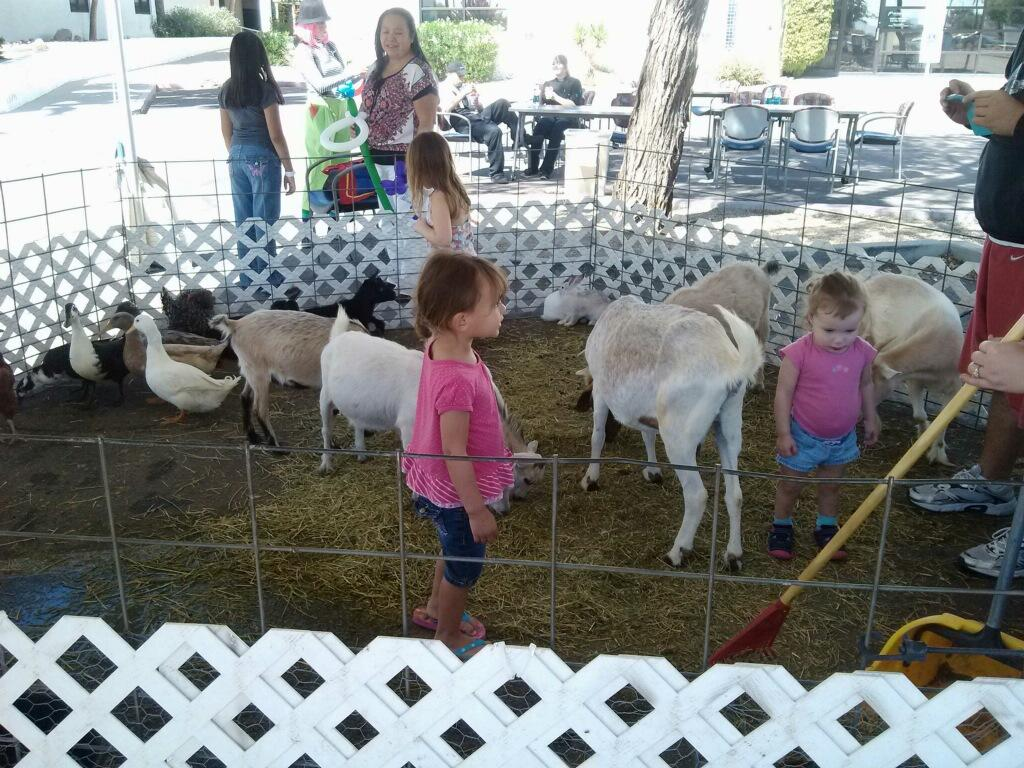 Our Easter Petting Zoo is a real treat for the whole family