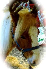 Our Ponies can wear their Reindeer Antlers to add to the Christmas Spirit