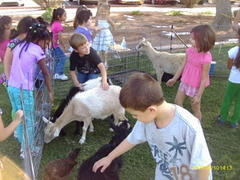 Large Event Petting Zoo - Two Hour Pkg