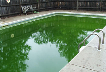 Folsom Green Pool Cleaning Service