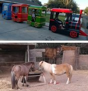 Train and Pony Rides