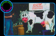 cow milking contest $399.00 DISCOUNTED PRICE