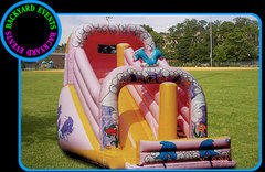 Giant dolphin slide DISCOUNTED PRICE