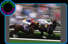 Day at the races $  DISCOUNTED PRICE