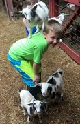 Goat Yoga Childcare