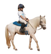 Item 05: Pony Rides - 2 Ponies Hourly