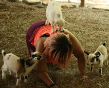 Goat Yoga With Quinn