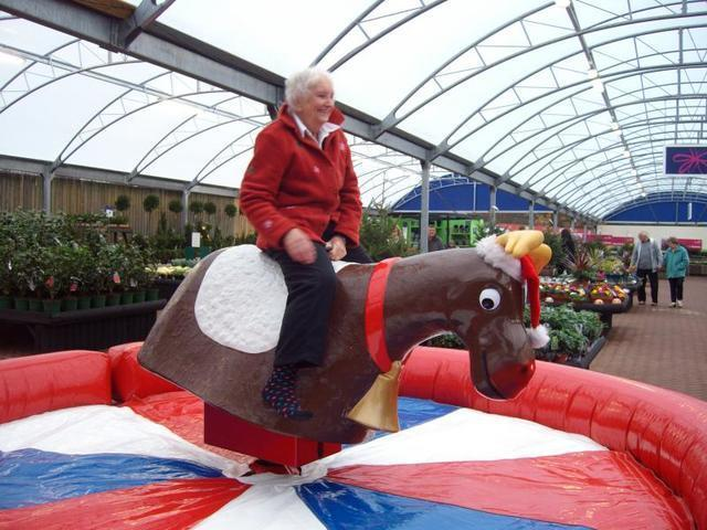 Mechanical bull - Rodeo Reindeer (includes 1 operator)