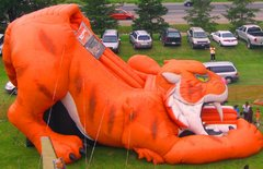 Wildcat Tiger Slide