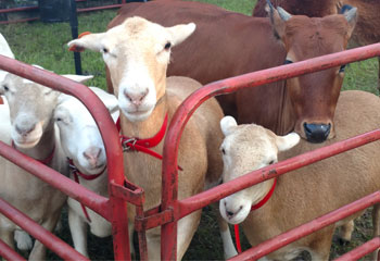 Petting Zoo Rentals from Carolina Fun Factory