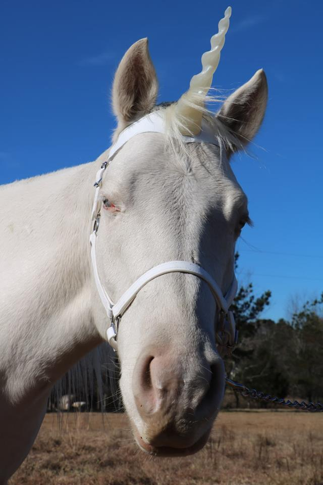 Unicorn pony rental NC