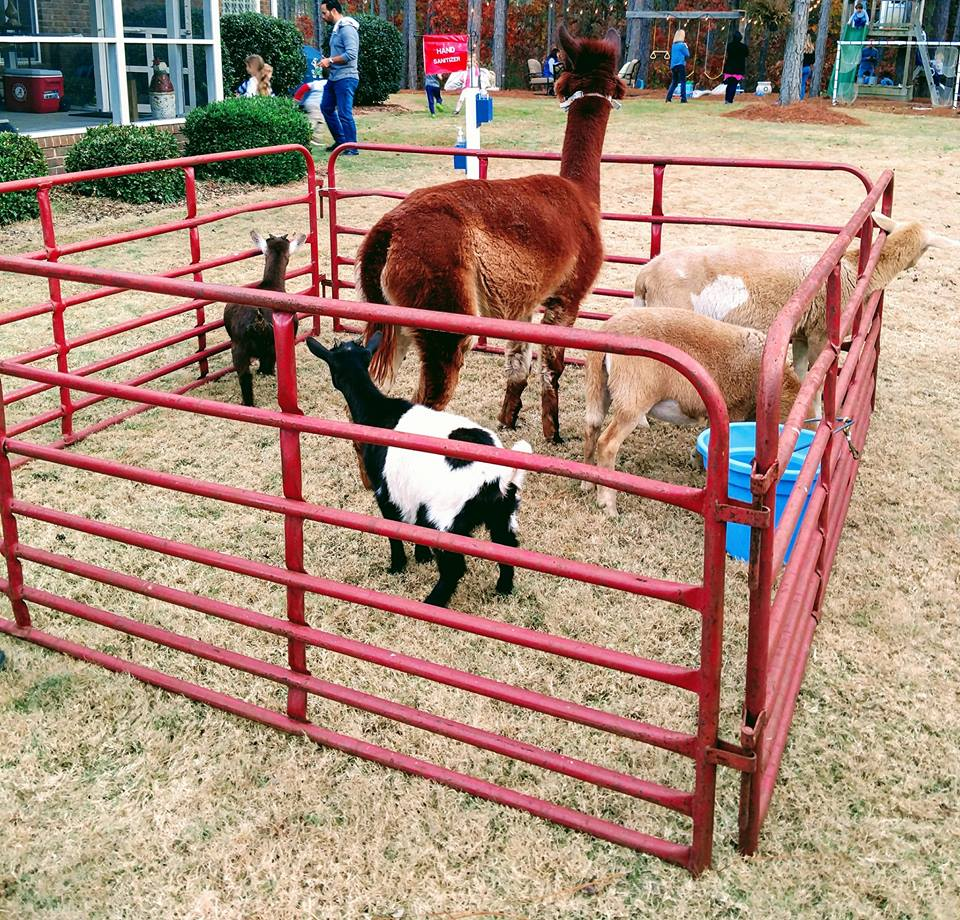 Petting Zoo Party