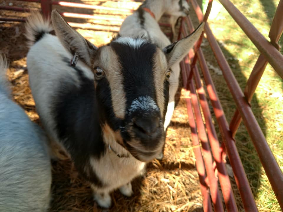 Mobile Petting Zoo Rentals