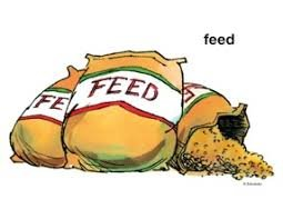 Set of Feed Bags (10)