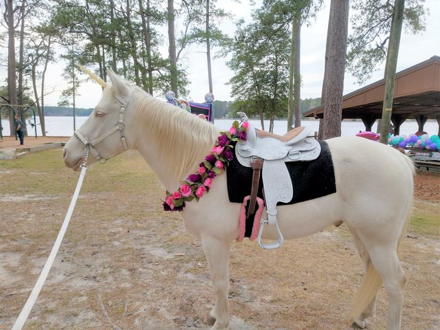 Unicorn Pony Rental
