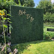8ft Boxwood Wall