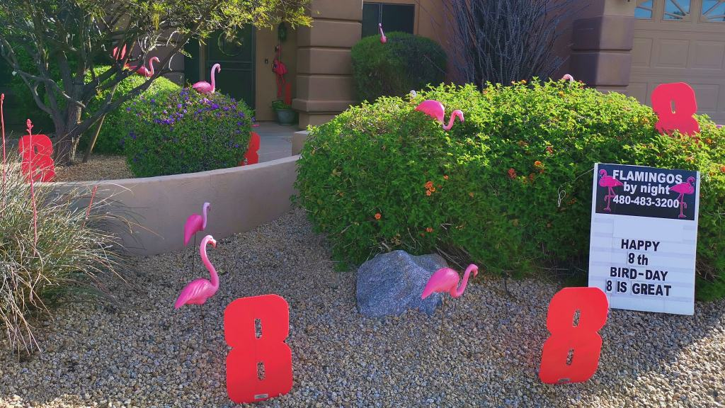 8 is just great with flamingos in the yard