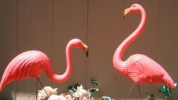 adopt a pair of the original Don Featherstone flamingos