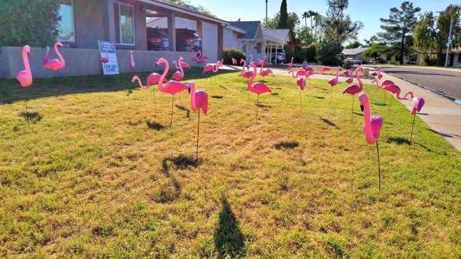 Bosses Day yard flock