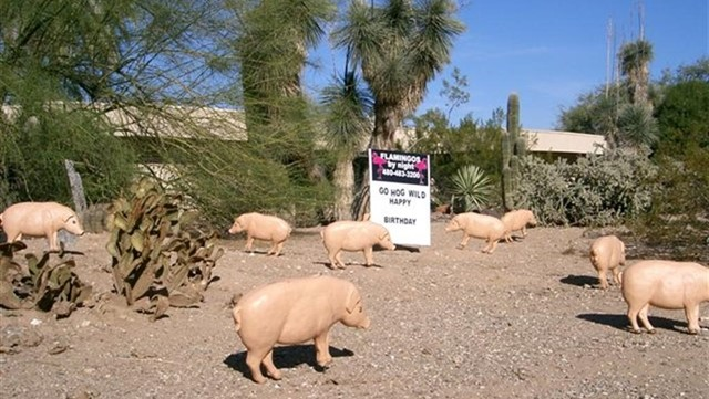 pigs yard decorations