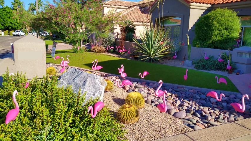 flamingos in grass yard