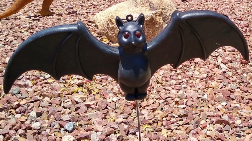 adopt a black bat for your batty friend