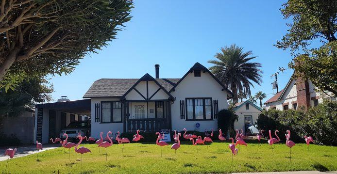flamingo flocking in yard for birthday