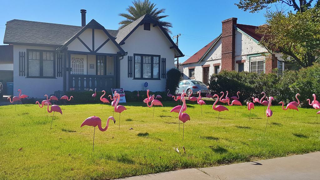 50 flamingos anniversary yard display