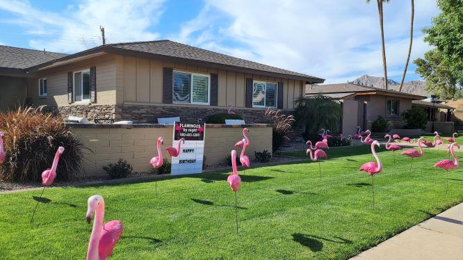 flamingos flocking service yard decorations