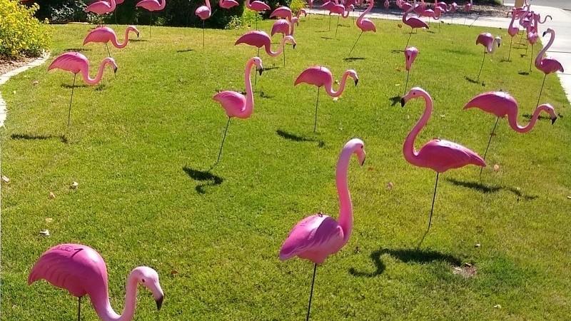 Flamingo birthday yard flocking