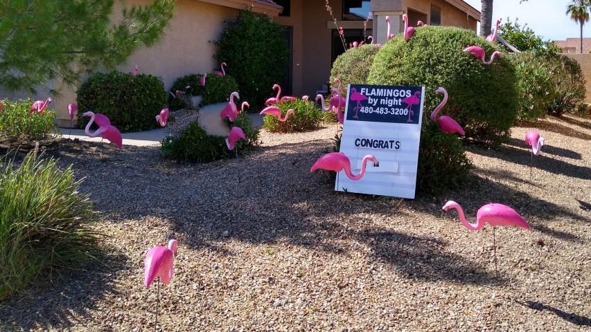 flamingos in yard for a graduate