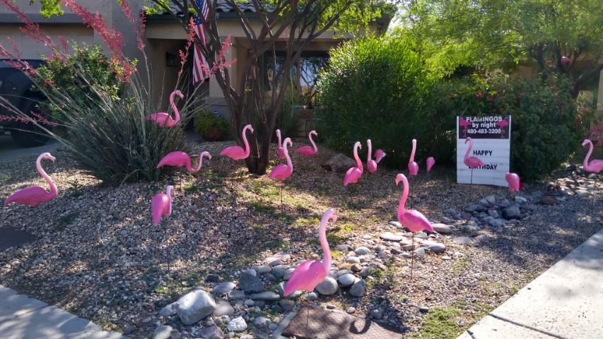 50 flamingos birthday yard sign