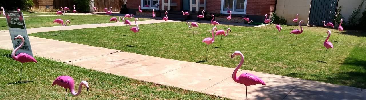 flamingo flocking service