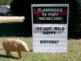 Go Hog Wild birthday yard sign with pigs