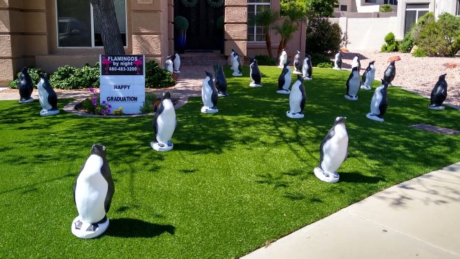 penguins in yard for a cool graduate