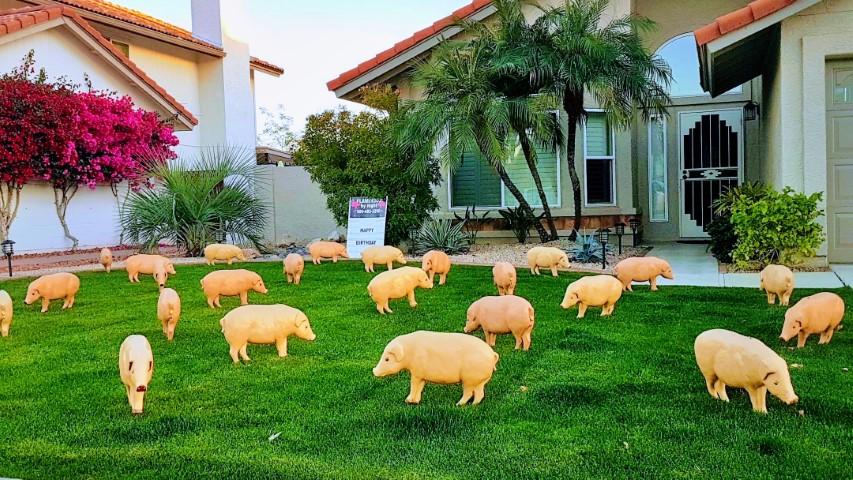 pigs yard decorations