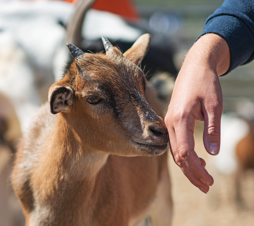 Temecula Murrieta Southern California Petting Zoo
