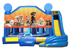 5 in 1 Obstacle Combo - Puppies & Kittens Window