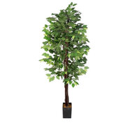 Green Ficus Tree 6ft
