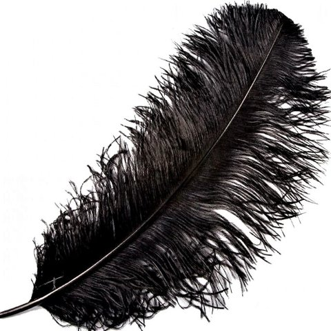 Feather - Ostrich Feather - Black