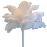 Solid White Feather Centerpiece