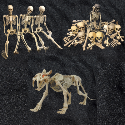 Skeleton Collection 34 pieces