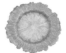 Silver Reef Charger Plate (For decor purposes only)