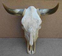 Cow Skulls Real-Western Decor