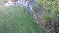 Last Minute Yard Care
